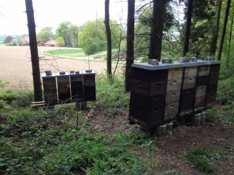 Bienenstand am Waldrand
