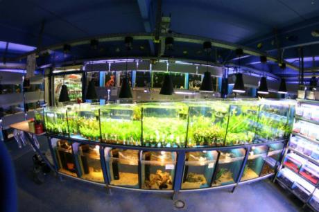Aquariumraum Pflanzenbecken